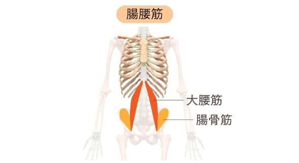 腸腰筋とは